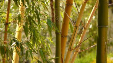 die richtigen Feng Shui Pflanzen
